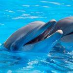 Je décore avec mon amour des dauphins